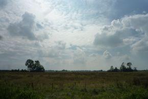 field,t_e